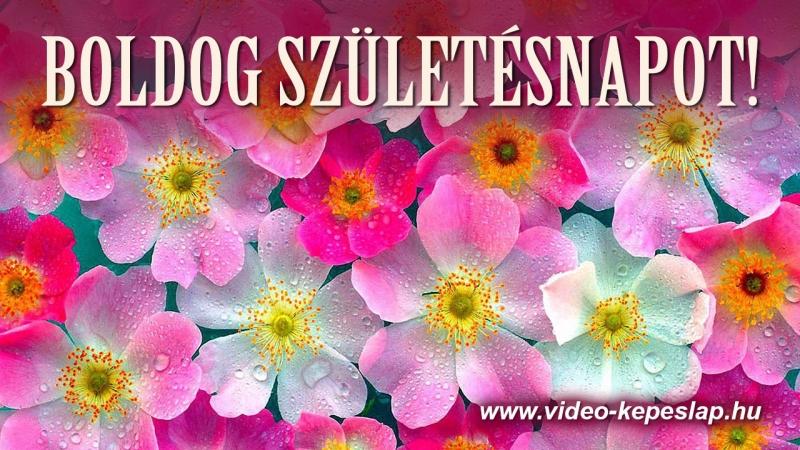 születésnapi videó küldés videó képeslap küldő születésnapi videó küldés